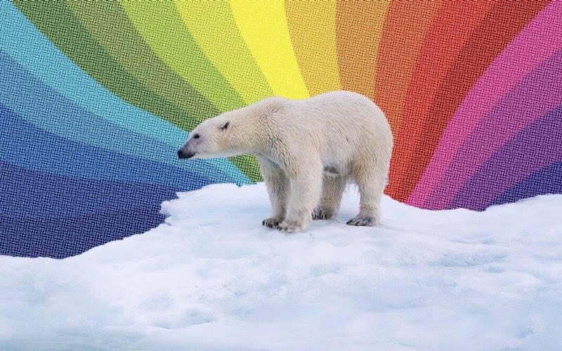 Cet ours blanc est il une illustration du green-pink wahsing ?