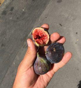 des figues dans des mains de pédé